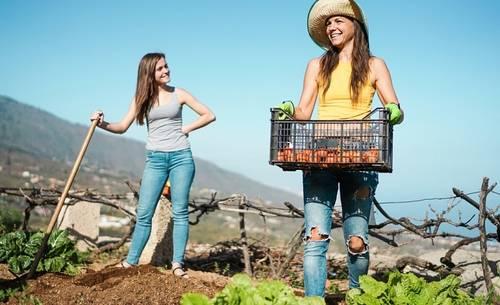 Make money fruit picking this Summer