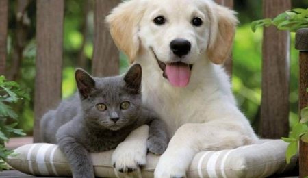 Make money from pet sitting and pet boarding